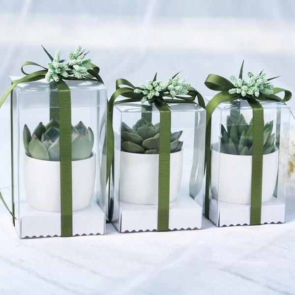 Пластиковая коробка для растений в горшках